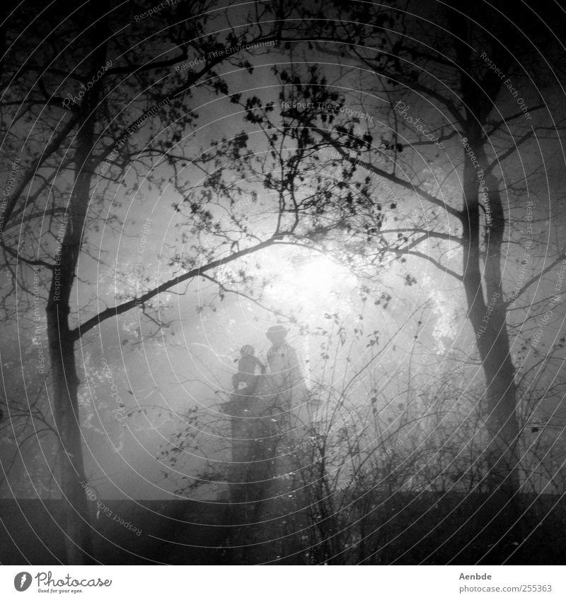 let´s get lost Baum gruselig Steinfigur Romantik dunkel Monster Nebel Schwarzweißfoto Außenaufnahme Experiment Nacht Silhouette Gegenlicht Sonnenlicht