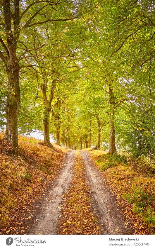 Panoramastraße in einem Herbstwald Ferien & Urlaub & Reisen Ausflug Abenteuer Expedition Camping Natur Landschaft Baum Wald Straße Wege & Pfade träumen braun