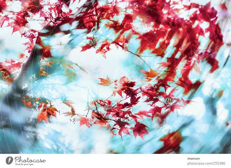 für dich soll's bunte bilder regnen Natur blau Baum Pflanze rot Blatt Herbst Bewegung Frühling Kunst Wind modern verrückt außergewöhnlich fantastisch chaotisch