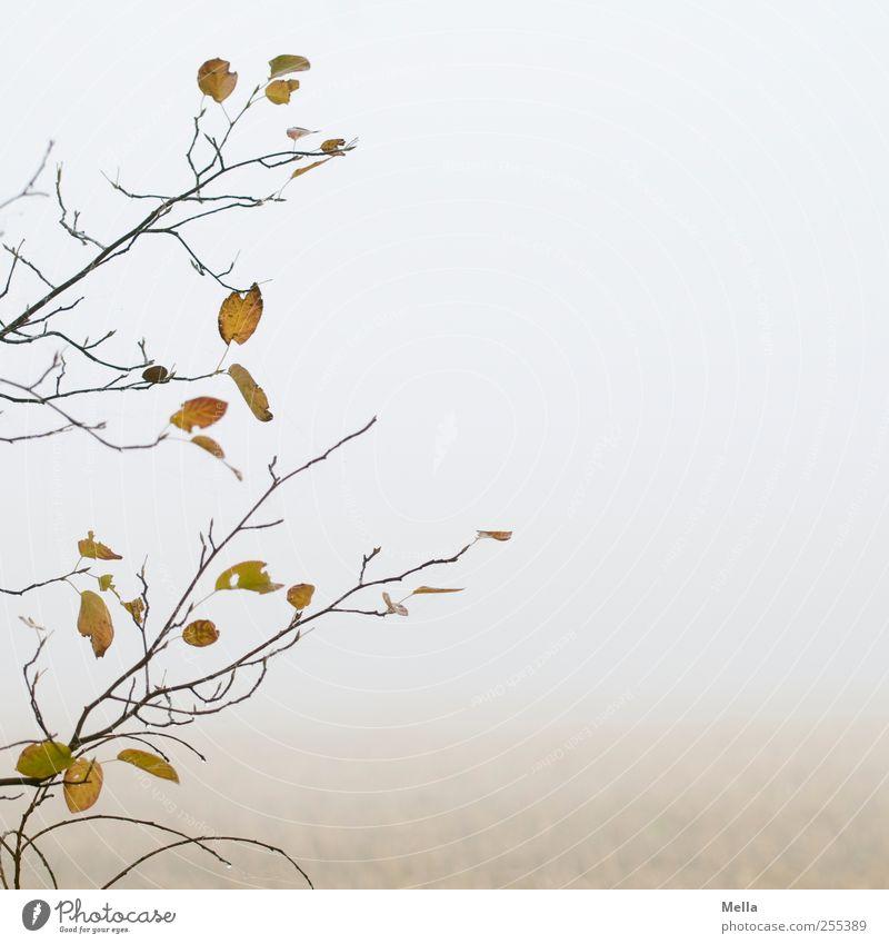 Für Dich soll's bunte Bilder regnen Umwelt Natur Pflanze Luft Herbst Nebel Baum Blatt Ast Feld verblüht dehydrieren hell natürlich trist grau ruhig Verfall