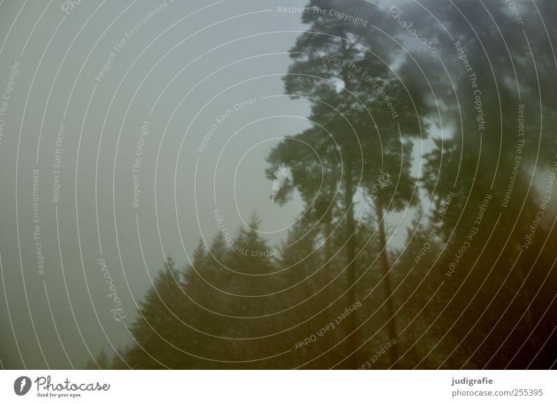 Für dich solls bunte Bilder regnen Natur Baum Pflanze Winter Wald dunkel Umwelt Landschaft Nebel schlechtes Wetter