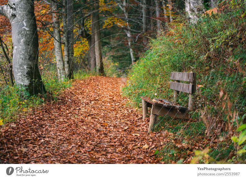 Natur schön Blatt Wald Berge u. Gebirge Herbst natürlich Deutschland wandern frei gold Europa Fußweg Örtlichkeit Gasse Herbstlaub