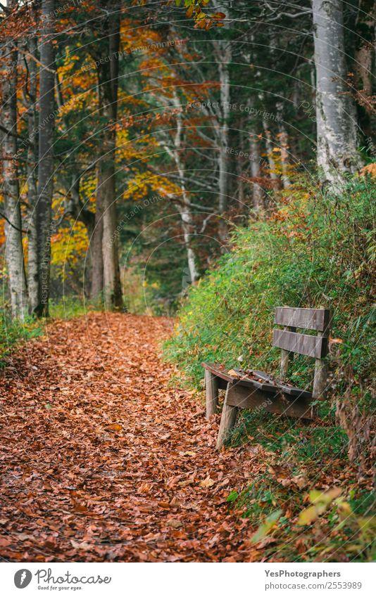 Natur schön Blatt Wald natürlich Deutschland Freizeit & Hobby wandern Park Europa Fußweg malerisch Örtlichkeit Gasse Herbstlaub Bayern