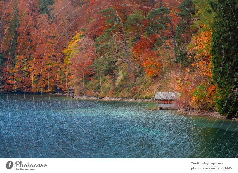 Natur Ferien & Urlaub & Reisen schön Farbe Landschaft Baum Blatt Wald Herbst natürlich Deutschland Freiheit See Ausflug träumen Europa