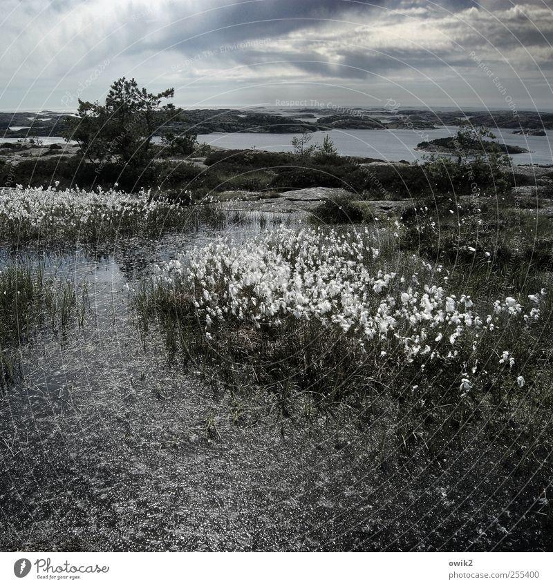 Wollgras Himmel Natur Wasser Baum Pflanze Meer Strand Wolken Umwelt Landschaft Gras Küste Wetter Horizont Felsen Insel
