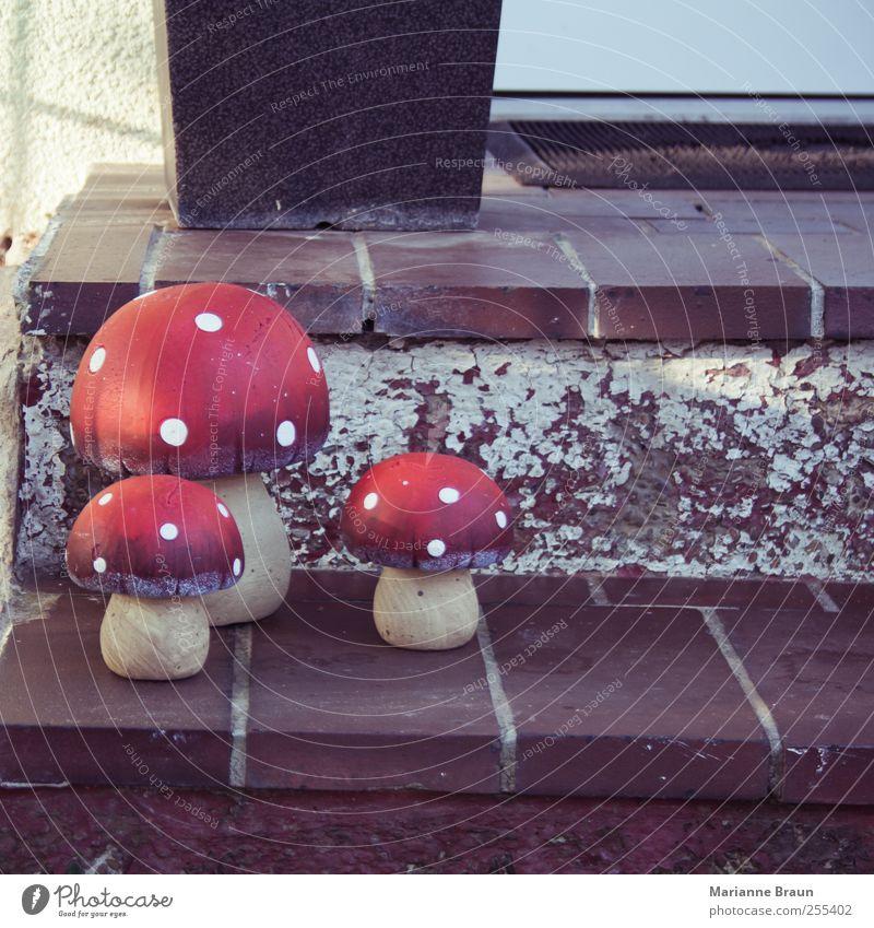 Steinpilze weiß rot braun Treppe gefährlich Dekoration & Verzierung Symbole & Metaphern Punkt Stengel Mütze Eingang Pilz Fleck Pilzhut Warnfarbe Glücksbringer