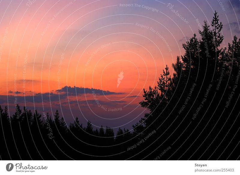 Himmel Natur Pflanze Farbe Baum Landschaft Blatt Wolken Ferne Wald kalt Berge u. Gebirge natürlich Horizont Wetter Luft