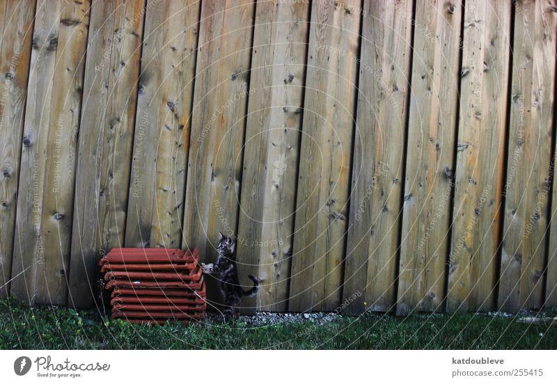 découvrir Tier Ferne Holz Katze Stein lernen Häusliches Leben Ziel Neugier geheimnisvoll Backstein bauen Haustier Inspiration Stolz Fortschritt