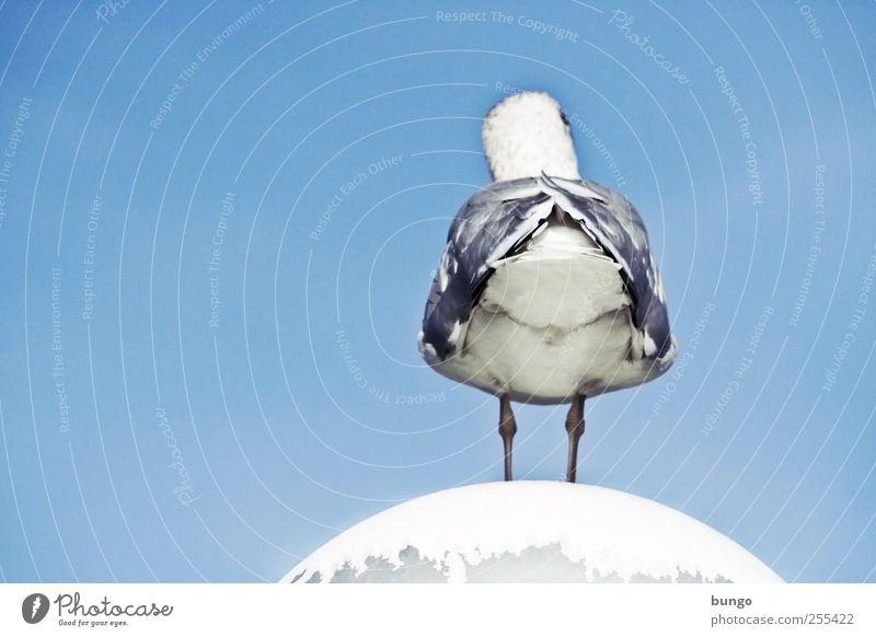 Promifoto: Mafs Hintern Straßenbeleuchtung Tier Vogel Flügel Möwe Möwendreck Feder Beine warten Langeweile sitzen Himmel Blauer Himmel Bürzel Farbfoto