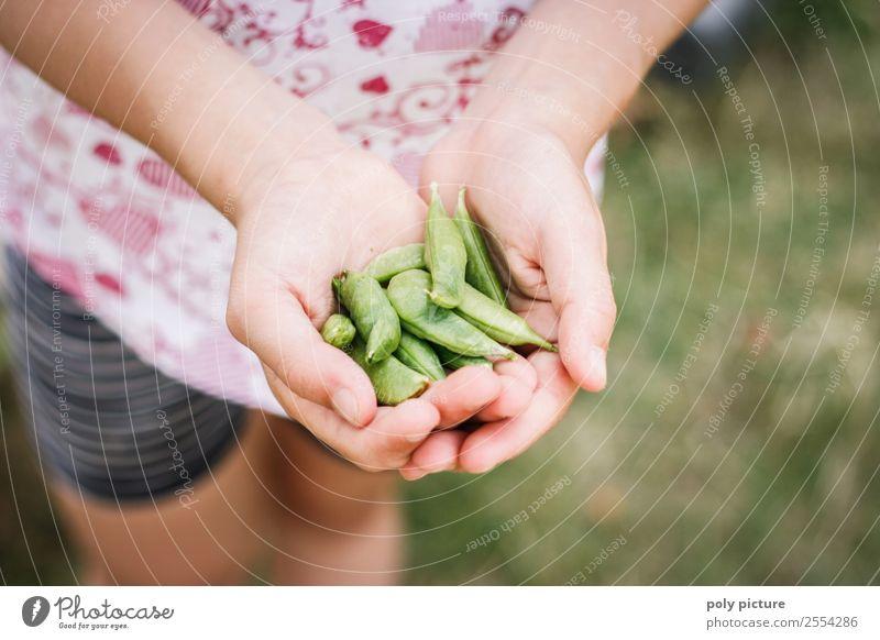 Junges Kind erntet Zuckerschoten Natur Jugendliche Junge Frau Sommer Pflanze Hand Leben Herbst Umwelt Lebensmittel Familie & Verwandtschaft Garten