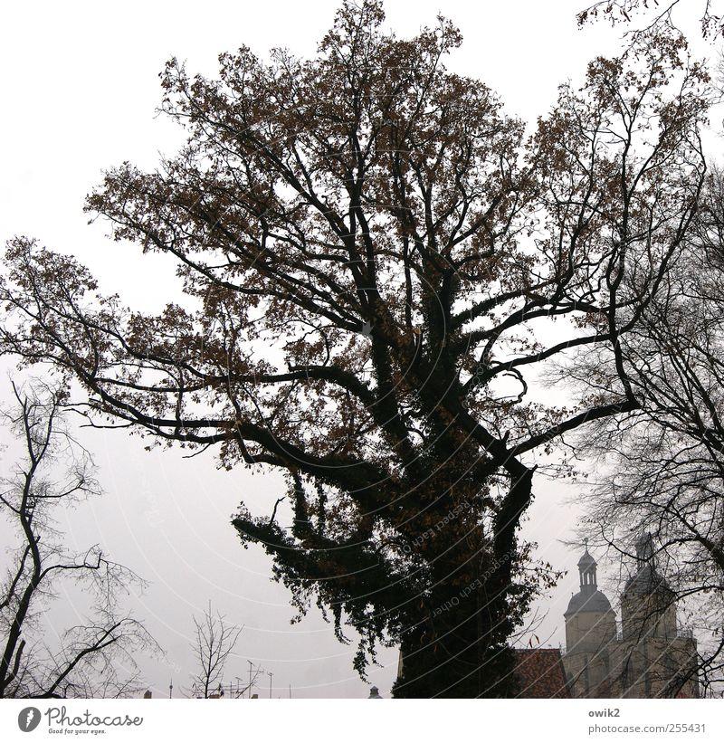 Wittenberg Himmel Baum dunkel Herbst Gebäude Nebel Wachstum Kirche Klima Schönes Wetter Macht Bauwerk Skyline Wahrzeichen Tradition Denkmal