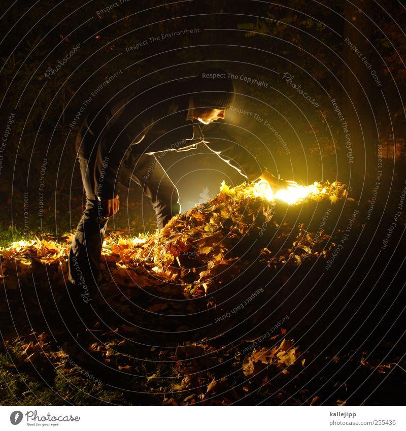 für dich soll´s bunte bilder regnen Mensch Natur Mann Blatt Erwachsene Umwelt Herbst maskulin Gold Suche geheimnisvoll Arbeit & Erwerbstätigkeit Respekt Gartenarbeit greifen Schatz