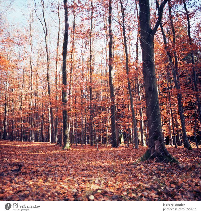 Für dich soll's bunte Bilder regnen Natur Pflanze Farbe Erholung Landschaft ruhig Wald Wärme Herbst Wege & Pfade braun Schönes Wetter Freundlichkeit