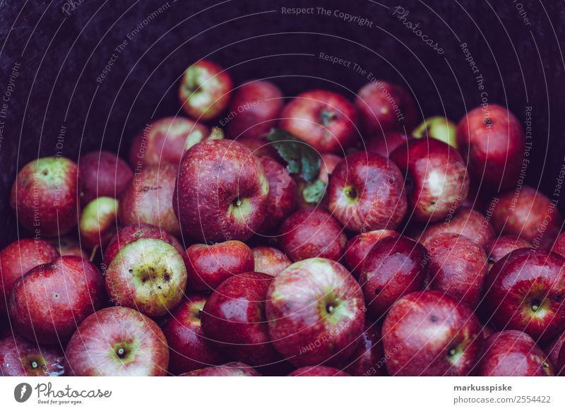 Frische Bio Apfel Ernte Natur Gesunde Ernährung Lebensmittel Garten Arbeit & Erwerbstätigkeit Frucht Freizeit & Hobby ästhetisch authentisch berühren