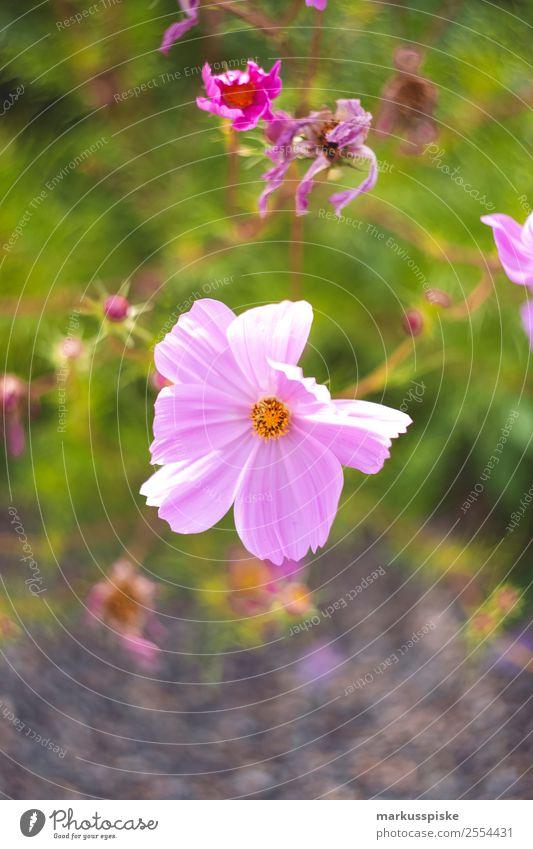 Blühender Blumen Garten Sommer Pflanze Sonne Erholung Tier Blatt ruhig Lifestyle Umwelt Blüte Stil Freizeit & Hobby Park elegant