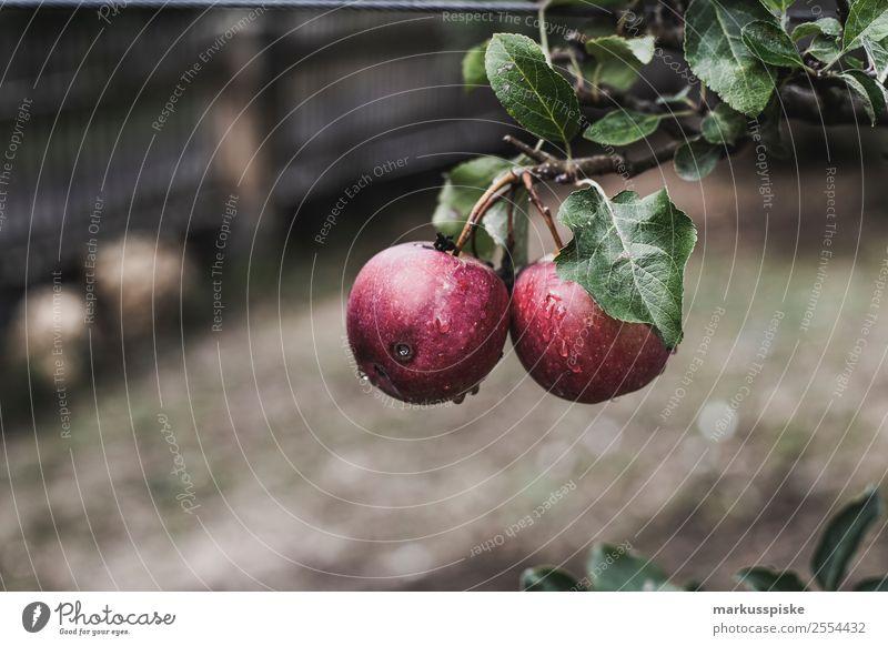 Frische Bio Äpfel Streuobst Lebensmittel Frucht Apfel Streuobstwiese Ernährung Essen Picknick Bioprodukte Vegetarische Ernährung Diät Fasten Fingerfood