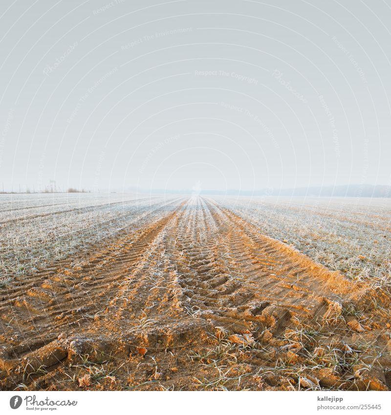 für dich soll´s bunte bilder regnen Umwelt Natur Landschaft Pflanze Tier Erde Sand Wolkenloser Himmel Winter Feld kalt Ackerbau Traktor Reifenspuren Horizont