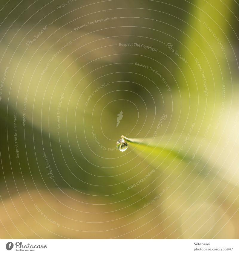 Für euch solls bunte Bilder regnen Umwelt Natur Landschaft Pflanze Wasser Wassertropfen Sonnenlicht Frühling Sommer Herbst Klima Schönes Wetter Regen Gras