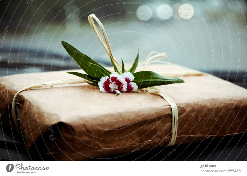 Für dich solls lauter Geschenke regnen blau schön Blume Freude natürlich Glück braun Freundschaft Design Geburtstag Kreativität Lebensfreude einzigartig Papier