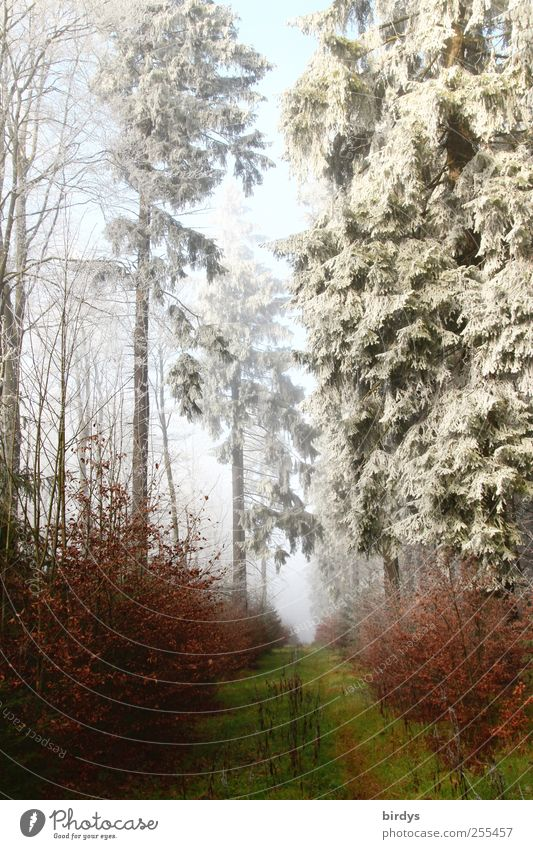Für dich soll` s bunte Bilder regnen Natur schön Baum Pflanze Winter Wald Herbst kalt Landschaft Eis Nebel Beginn frei Klima authentisch Wandel & Veränderung