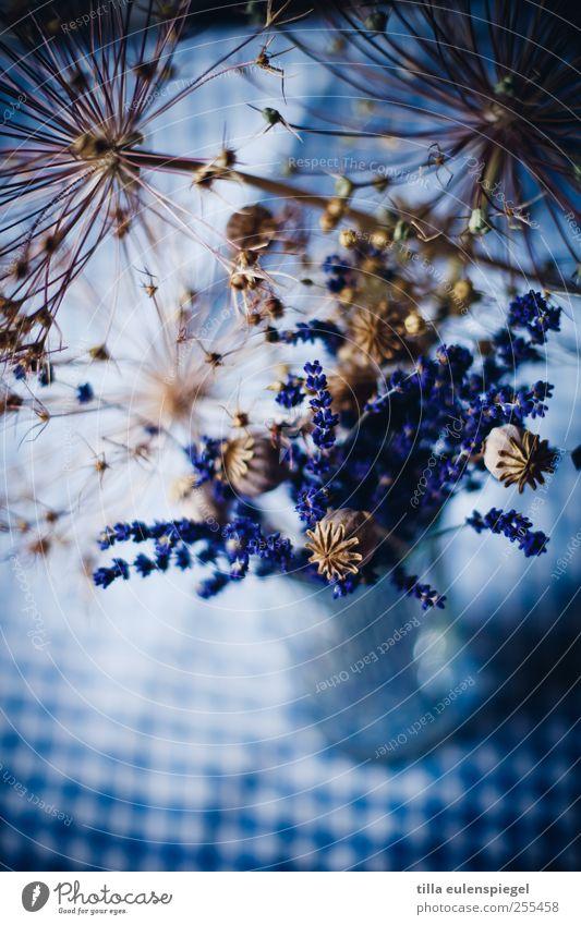 für dich soll´s bunte bilder regnen! blau Farbe dunkel Dekoration & Verzierung Vergänglichkeit Blumenstrauß kariert Lavendel dehydrieren blau-weiß