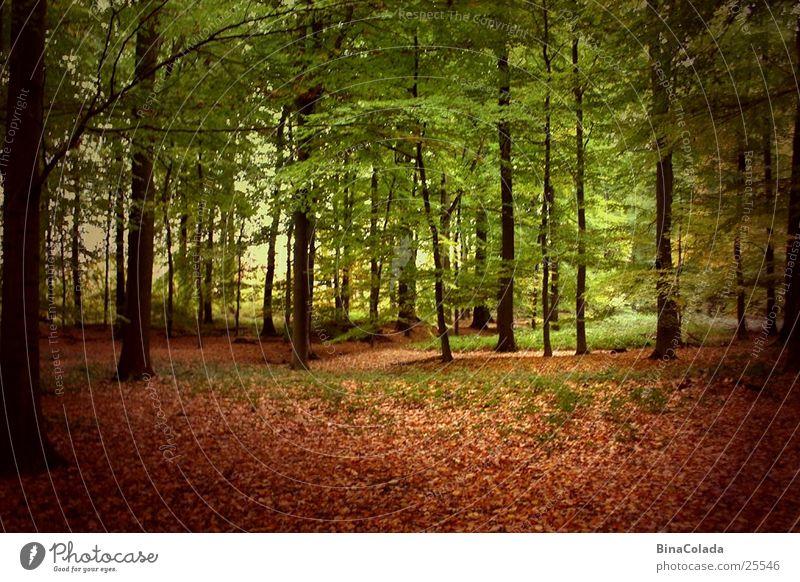 Herbstwald Baum Wald Blatt Herbstlaub Waldboden Schatten Natur
