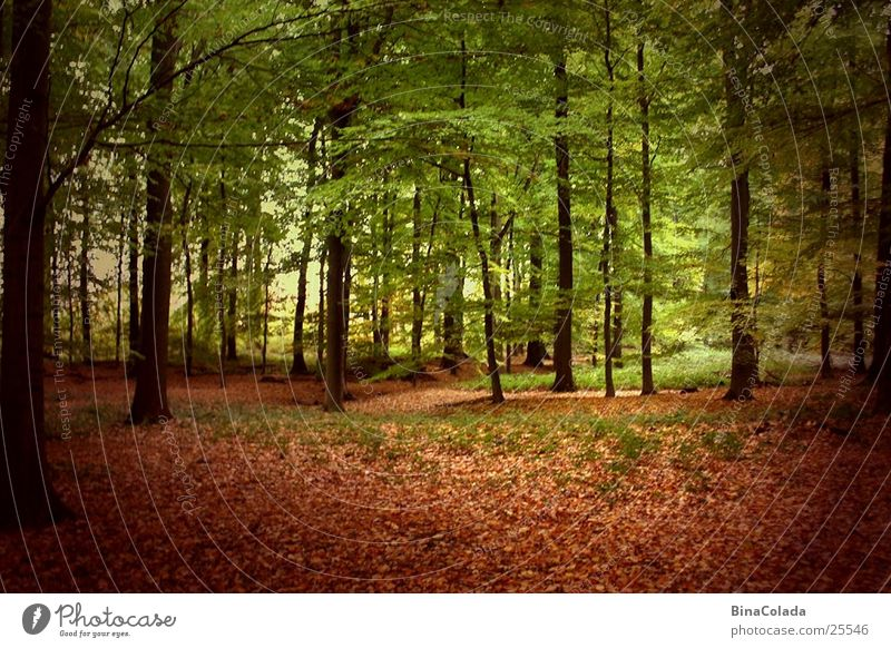 Herbstwald Natur Baum Blatt Wald Herbst Herbstlaub Waldboden