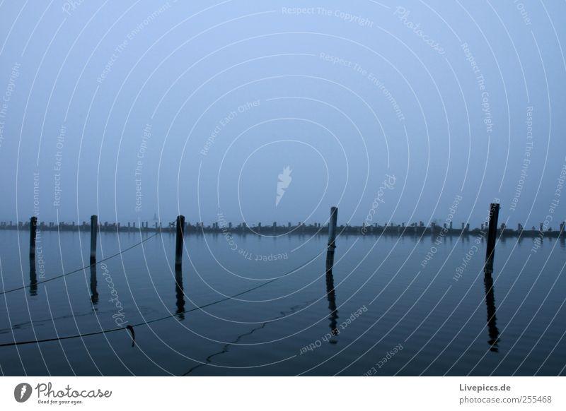 Schlafplatz für Wasservögel Natur Tier Herbst Umwelt Landschaft grau See Vogel Nebel Tiergruppe Hafen Gelassenheit Seeufer schlechtes Wetter Nebelstimmung