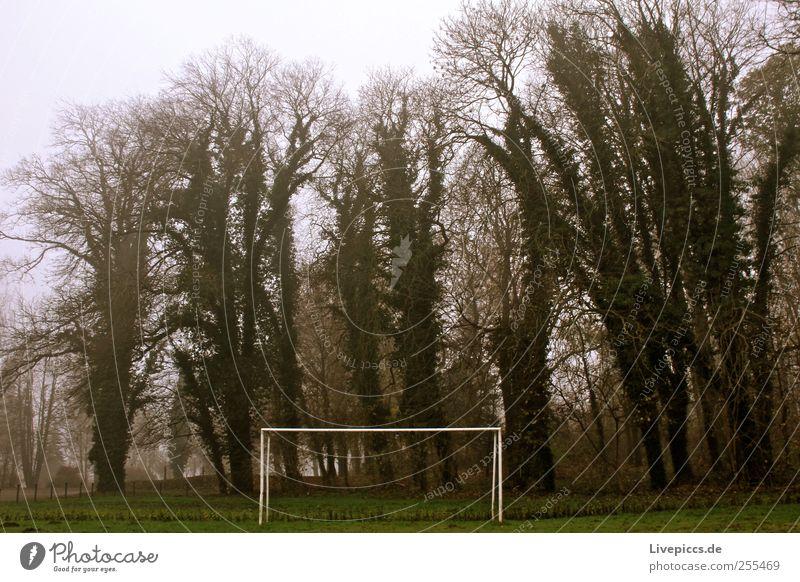 Stadion im Nebel grün Baum Pflanze Herbst grau Nebel schlechtes Wetter Fußballplatz Sportstätten Nebelstimmung