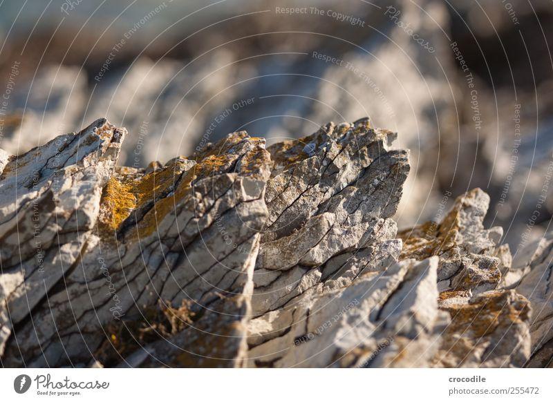 Rocksolid Umwelt Natur Urelemente Felsen Küste alt ästhetisch außergewöhnlich Stress bizarr Flechten Neuseeland Farbfoto Gedeckte Farben Außenaufnahme