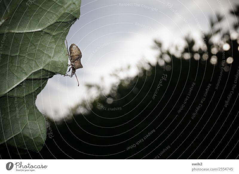 Lauschangriff Umwelt Natur Pflanze Tier Himmel Schönes Wetter Sträucher Blatt Hecke Garten Wildtier Wanze 1 beobachten Bewegung festhalten klein nah achtsam
