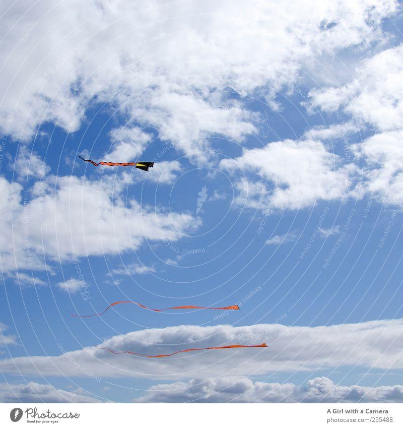 für dich soll es bunte fahnen wehen Himmel blau Sommer Wolken Wetter Freizeit & Hobby Wind fliegen hoch Fahne dünn Schönes Wetter trendy Drachenfliegen