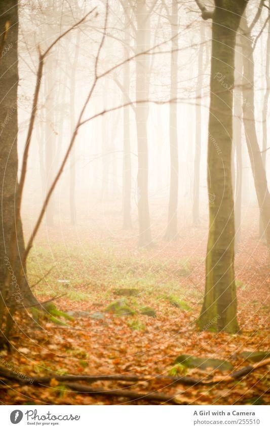 zwei Gründe zu feiern Natur Wald Herbst Umwelt Landschaft elegant Nebel wild Unendlichkeit gruselig steil schlechtes Wetter