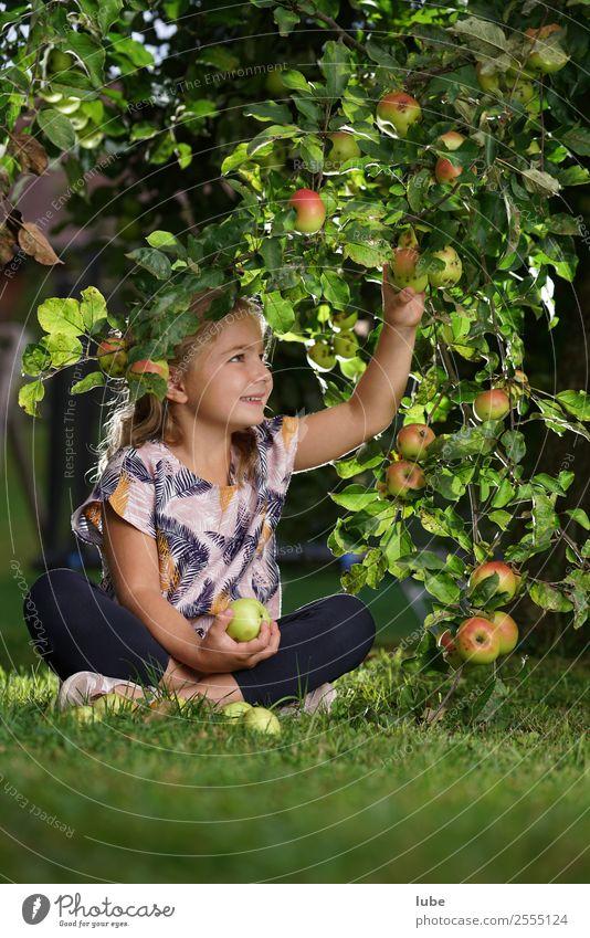 Apfelmädchen 2 Frucht Ernährung Essen Gartenarbeit Kind Kleinkind Mädchen 3-8 Jahre Kindheit Umwelt Natur Landschaft Herbst Apfelernte obsternte Apfelbaum Ernte
