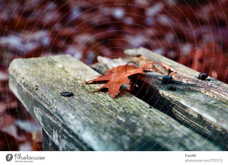 Für dich soll´s bunte Bilder regnen.... Natur Herbst Schönes Wetter Parkbank Bank Holz Metall Bewegung genießen natürlich blau grün rot Zufriedenheit