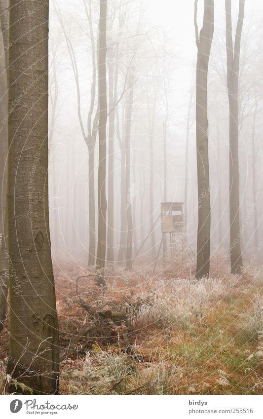 Für euch soll`s bunte Bilder regnen ... Umwelt Natur Landschaft Pflanze Herbst Wetter Nebel Eis Frost Baum Wald authentisch außergewöhnlich Einsamkeit Idylle