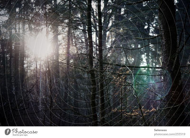 Für euch solls bunte Bilder regnen Ausflug Abenteuer Umwelt Natur Landschaft Sonne Herbst Schönes Wetter Pflanze Baum Ast Zweig Geäst Wald dunkel gruselig