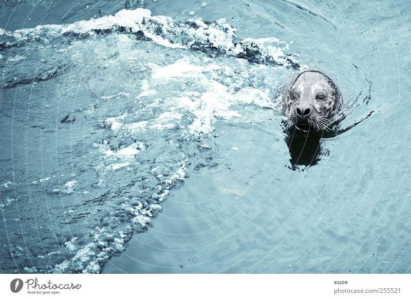 Für Dich solls bunte Bilder regnen! Natur blau Wasser Meer Tier Umwelt Kopf Wellen Schwimmen & Baden Wildtier wild niedlich Neugier beobachten Tiergesicht