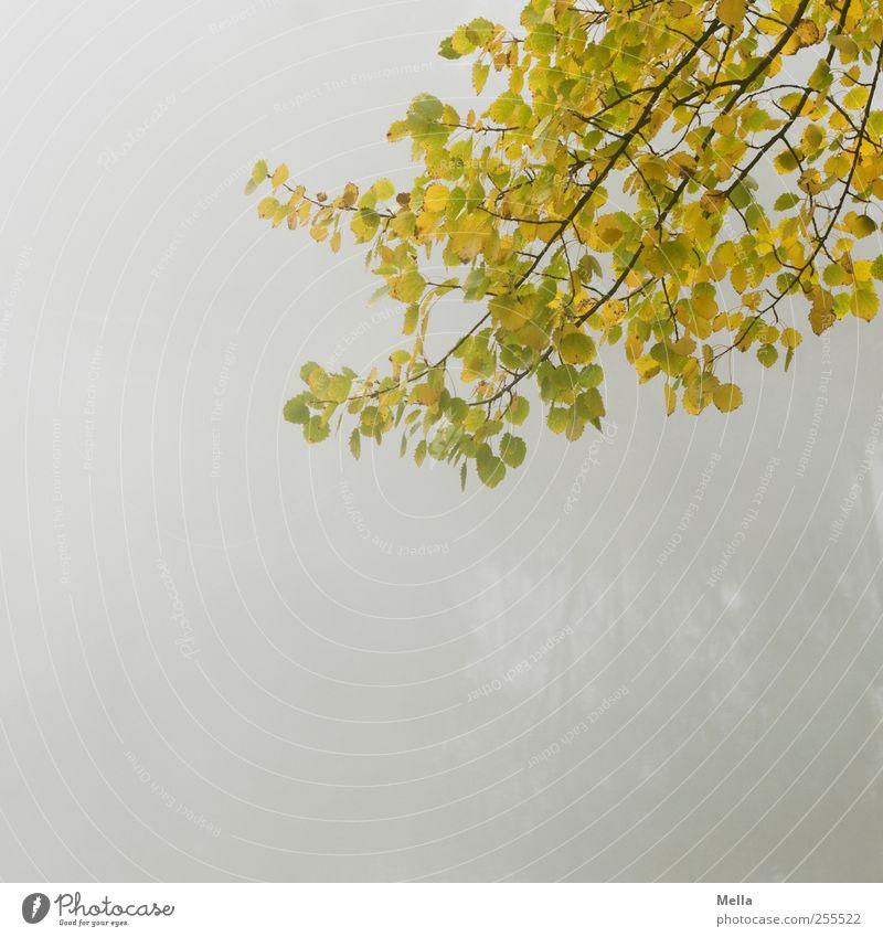 Für Dich soll's bunte Bilder regnen Umwelt Natur Pflanze Herbst Nebel Baum Blatt Ast dehydrieren Wachstum natürlich trist grau ruhig Verfall Zeit Farbfoto