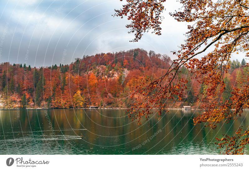 Grünes Wasser See und Herbstwald Ferien & Urlaub & Reisen Natur Landschaft Baum Blatt Wald träumen natürlich schön Stimmung Farbe Alpsee Bayern Fussen