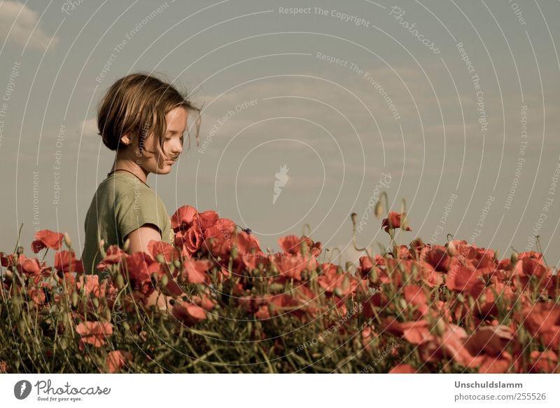 Für Dich soll der Mohn blühen... Mensch Kind Himmel Natur Pflanze rot Sommer Blume ruhig Wiese Leben Umwelt Landschaft Gefühle Junge Wärme