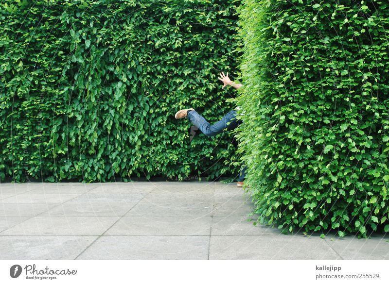 für dich soll´s bunte bilder regnen Mensch Natur Pflanze Blatt Umwelt Park maskulin rennen Sträucher Biologie Hecke Grünpflanze Versteck