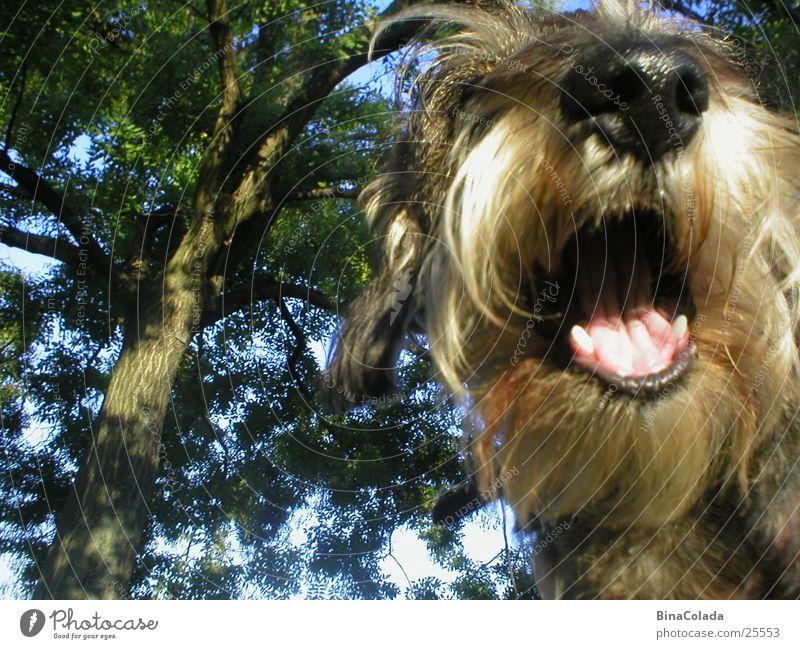 Ein tierisches Lächeln Hund Dackel Haustier Fell Lippen Tier lachen Nase Gebiss Haare & Frisuren Maul Mund Rauhhaardackel Natur Idee