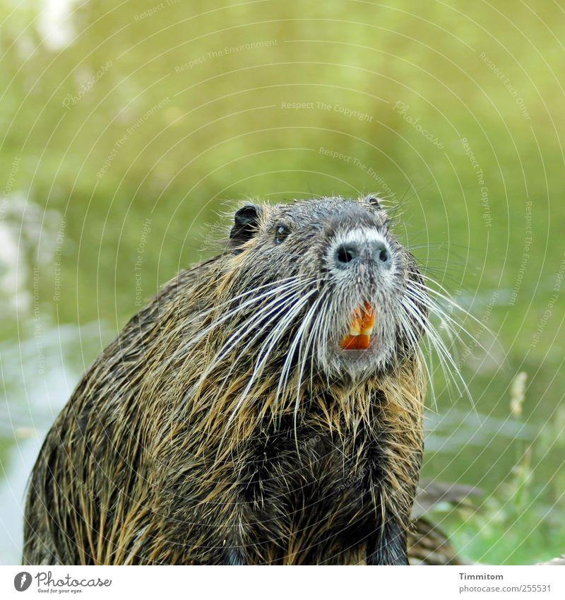 Für Euch soll`s bunte Bilder regnen! Natur Wasser grün schön Freude Tier Umwelt natürlich Fröhlichkeit Wildtier Coolness niedlich Neugier Mut dick Wachsamkeit