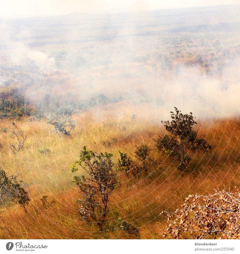 heiße Savanne! Umwelt Natur Luft Wolken Klimawandel Wind Pflanze Gras Sträucher Feld bedrohlich Abenteuer Wärme Rauch Feuer Steppe Flächenbrand Gemälde Ferne