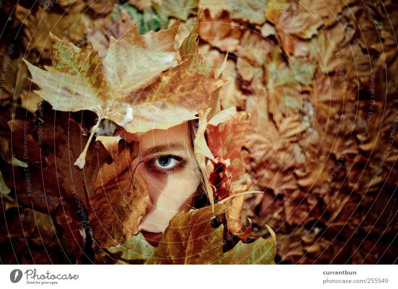 leaf me alone Blatt Auge Herbst dunkel Stimmung braun Spiegel Kreativität skurril vertrocknet Stolz Augenbraue Blattgrün Blattfaser