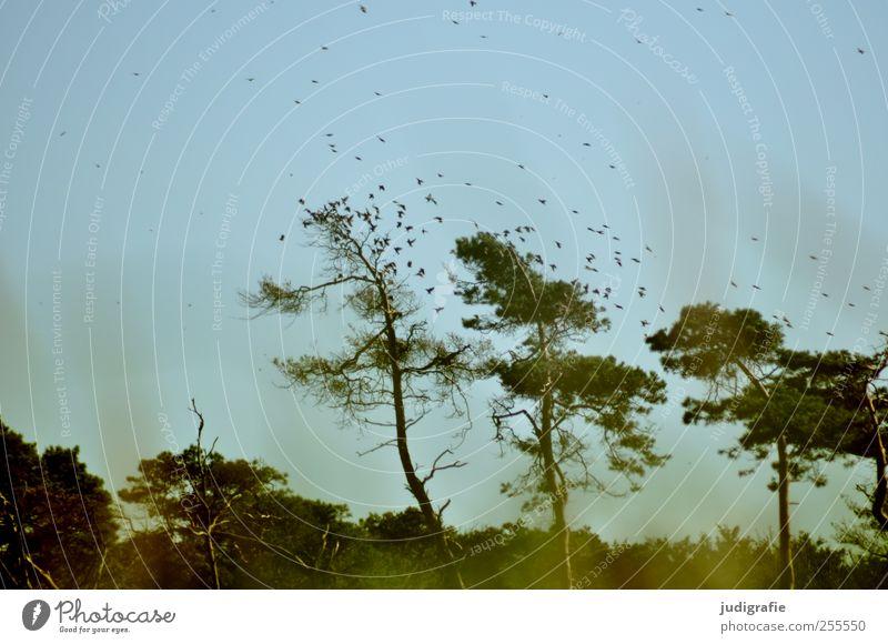 Weststrand Natur Baum Pflanze Tier Wald Umwelt Landschaft Bewegung Küste Vogel fliegen natürlich wild Wildtier Schwarm