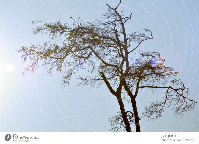 Weststrand Himmel Natur Baum Pflanze Umwelt natürlich Vergänglichkeit kahl