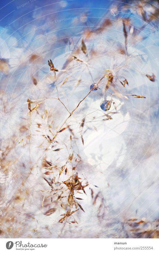 nasses Gras Natur Wassertropfen glänzend authentisch außergewöhnlich fantastisch kalt klein natürlich blau Farbfoto Außenaufnahme Nahaufnahme Detailaufnahme