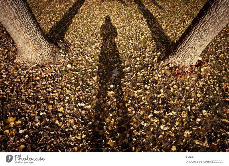 Ich glaub' ich steh im Wald. Landwirtschaft Forstwirtschaft Mensch 1 Umwelt Natur Landschaft Pflanze Urelemente Erde Herbst Baum gigantisch groß lustig schön
